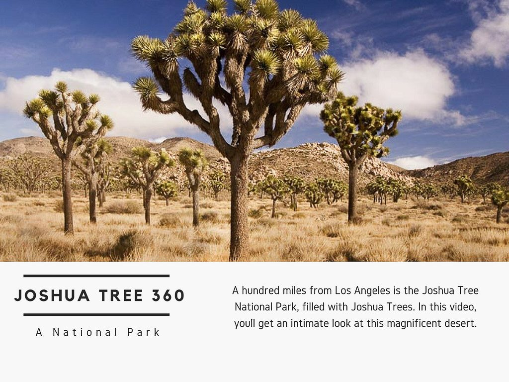 Virtual Reality Production Studio JYC VR Catalog USA Joshua Tree